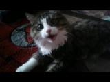 Жизнь моего кота Васи. Весело живётся, когда нет дел 48