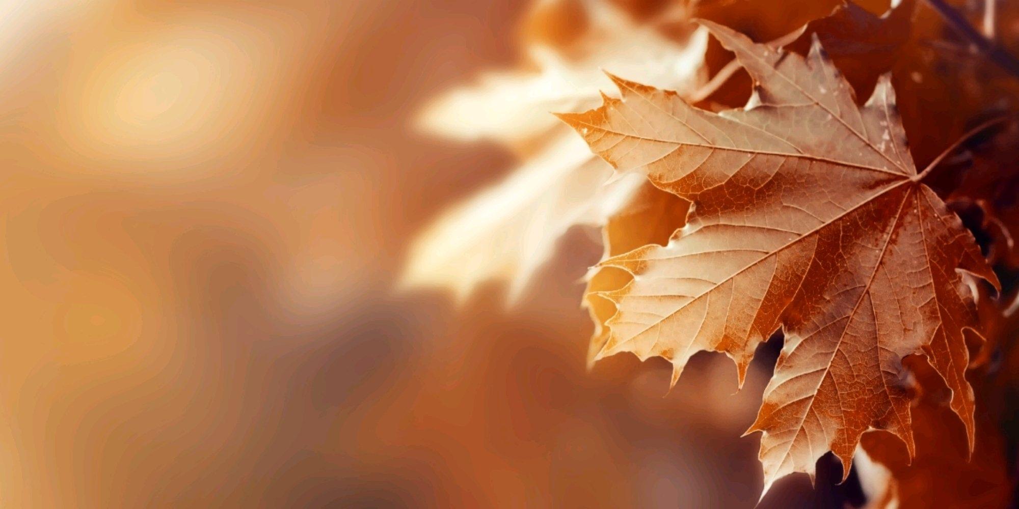 Духи на осень: какие выбрать   5 актуальных женских и мужских осенних ароматов