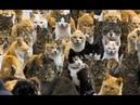 Русские кошки! Я плакал!