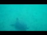 Черепашки морские