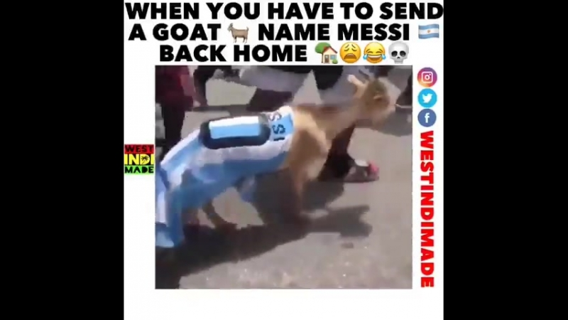 BRAZIL FANS AIN'T PLAYING IN HAITI TAG A ARGENTINA FAN caribbeanstrong caribbean haitiansbelike caribbeanpeople argentina tsr