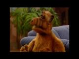 Alf Quote Season 2  Episode  24_Понравилась идея