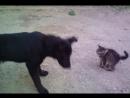 кот собакабои