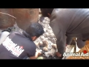 Stuck for hours in rock-solid tar, puppies rescued. Watch til the end. [VDownloader]