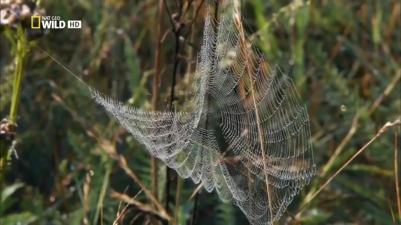 Супер паук