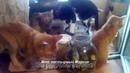 Приключения кота Марсика и компании с огурцами. Вот это огурцы