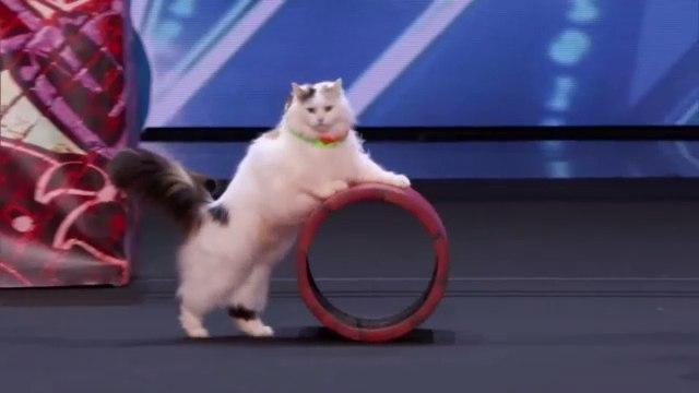 Украинские дрессировщицы кошек наповал сразили судей America s Got Talent 2018