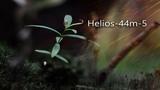 Helios-44m-5 Красивый ВИДЕО-ТЕСТ