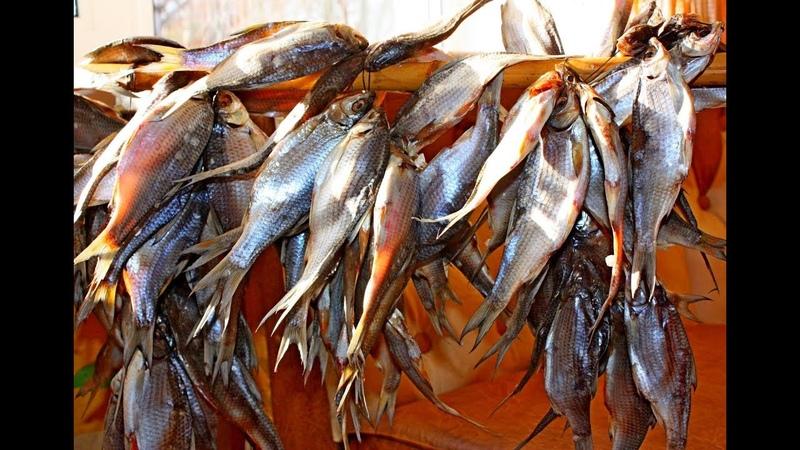 Как правильно сушить Рыбу Как вкусно завялить плотву Самый простой способ