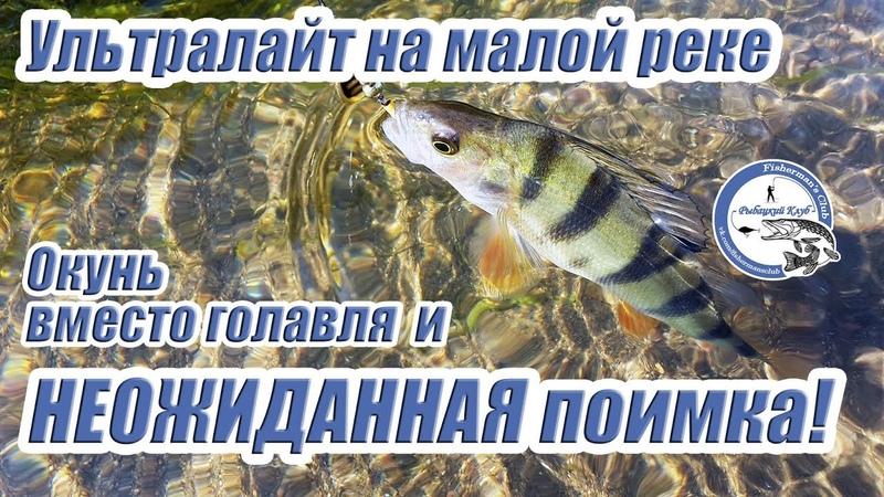 Ультралайт на малой реке. Окунь вместо голавля и НЕОЖИДАННАЯ поимка!