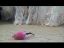 Охота на мышьD