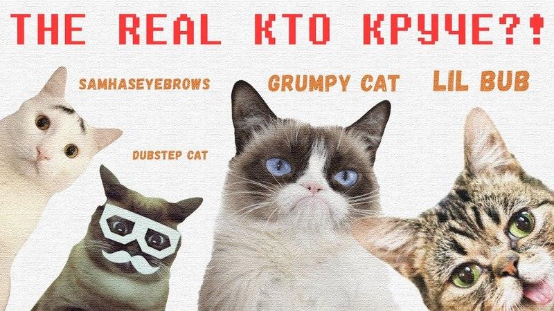 Кто Круче - Grumpy Cat, Lil Bub, Samhaseyebrows или Dubstep Hipster Cat Skifcha