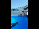 купание с дельфином