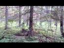 Окончание пути отдых и релакс в лесу