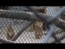 Казанский зоопарк.