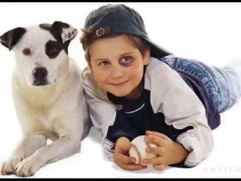 Не дразните собак Видео на детскую песню песни для детей Детские песенки