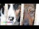 Приютом для бездомных животных в Сергиевом Посаде заинтересовались зоозащитники