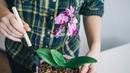 ОРХИДЕИ цветут как БЕШЕНЫЕ. Необычный полив