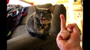 Cats Hate Being Flipped Off - Funny Angry Cat Reaction to Middle Finger Compilation
