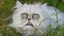 🔴«Самый страшный котик в мире» напугал пользователей сети…