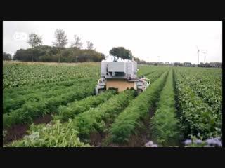 В Германии изобрели робота, который безошибочно определяет сорняки и уничтожает их. Быстро и аккуратно. И никаких химикатов.