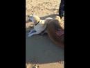 Sea doggo cuddles with land doggo