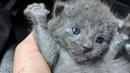 Новорожденного котенка выбросили на улицу как ненужный мусор