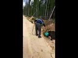 Медведь засунул голову в канистру