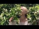 Удивительное наслаждение цветением - группы Танца Апсар с Танит