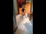 Собака учит ребенка прыгать