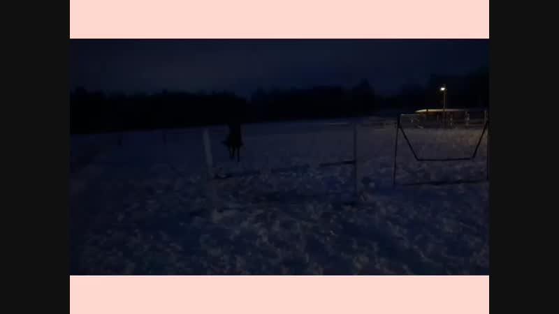 Прыжковая тренировка 05 01 19