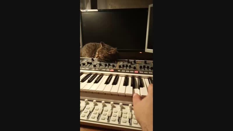музыка для кошки без оркестра