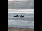 Жители Хабаровска спасли провалившуюся под лёд собаку [NR]