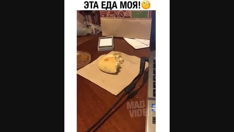 Наглый какой человек это еда кота))