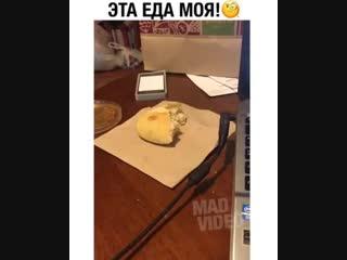 Наглый какой человек))) это еда кота)))))