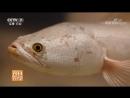 Кефаль белая ''Бай У ЮйИнь''. Технология разведения редкой рыбы в условиях искусственного водоёма. Особо ценная порода в экономи