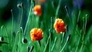 Релакс с цветами Podryga on