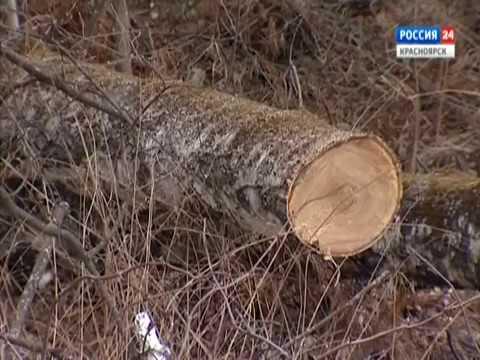 Депутаты Горсовета вышли с инициативой разработать правила высадки деревьев в городе