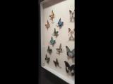 XXXTentacion на выставке экзотических бабочек, насекомых и птиц (instagram stories 16.03)