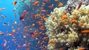Scuba Diving the Great Barrier Reef Red Sea Egypt Tiran Full HD