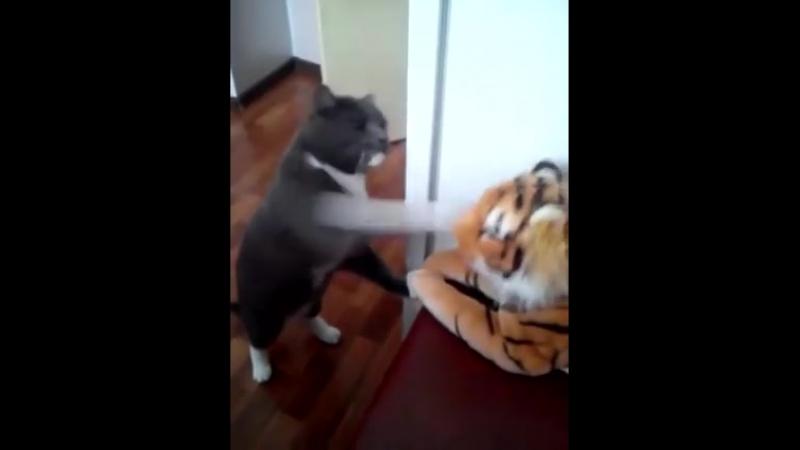 Кошка взбесилась