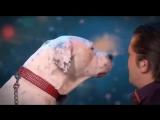 Собака поет песню Уитни Хьюстон