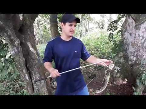 Roberto Poirier; Manipulando una Cascabel, Crotalus simus. Costa Rica
