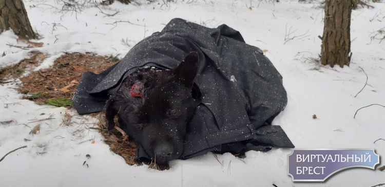 Кто-то зверски избил собаку и бросил умирать в лесу. Волонтёры просят о помощи