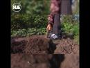 За дикорастущий мак в огороде пенсионеру дали год условно