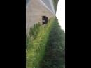 Медведь на Головных 15.07.2018