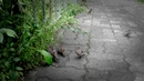 Воробьи после дождя случайные кадры по дороге домой