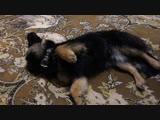 Happy End: Пёс из автобуса дома! / Прямой эфир от Онлайн Брест