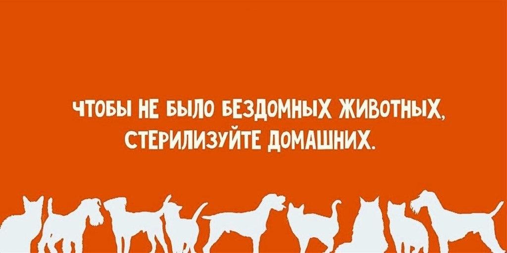 31 мая кошек и собак в Таганроге и области стерилизуют по льготной цене