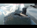 Amazing fligts with birds on board a microlight. Christian Moullec avec ses